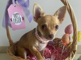 Easter Pet Photo Competition Time! 6