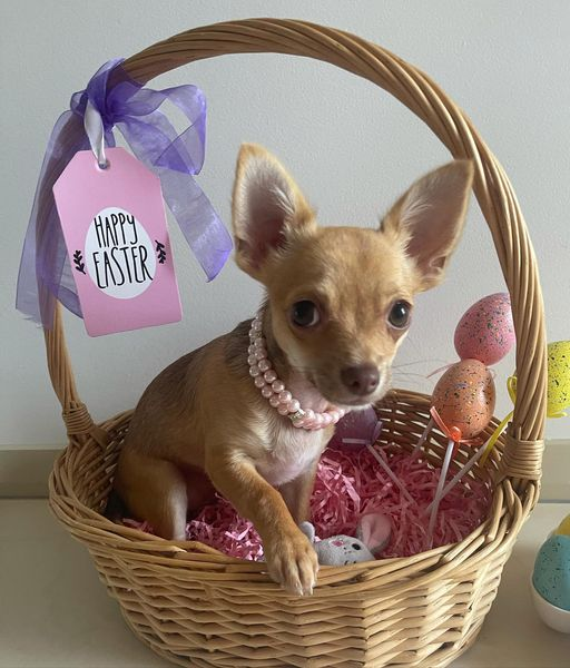 Easter Pet Photo Competition Time! 1