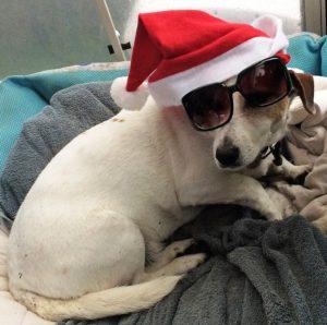 Chester Keeping Santa 1