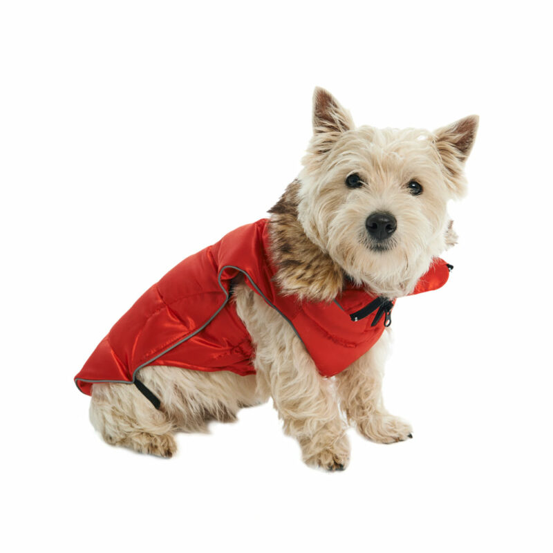 BUSTER Active Winter Dog Coat High Risk Red Large 2