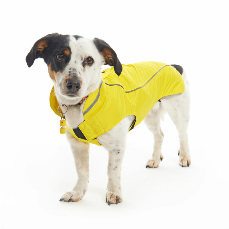 BUSTER Classic Dog Raincoat Lemon Small/Medium 2