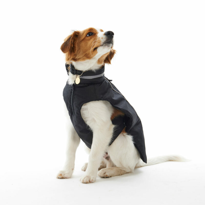 BUSTER Classic Softshell Dog Coat Blackberry Medium 2