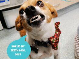 How do I keep my dog's teeth clean? 6