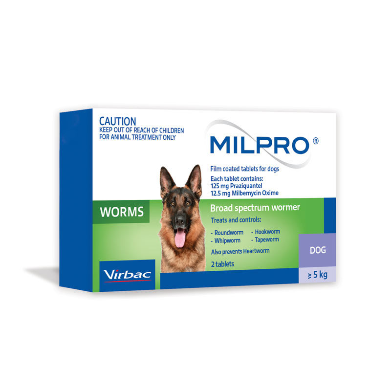 Bravecto Plus Green Spot-On for Kittens and Small Cats 3