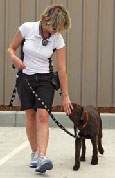 Dog training Newcastle NSW