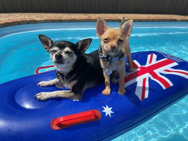 Australia Day Hours 5