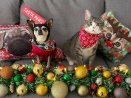 Christmas Pet Photo Competition Time!! 11