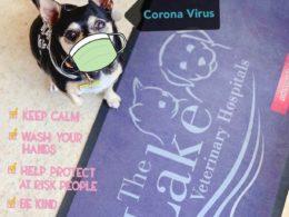 COVID-19 (Coronavirus) Update 1