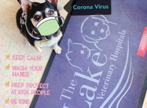 coronavirus 3