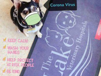Pet Care 5