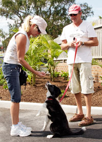Good Dog Manners classes