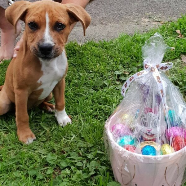 Easter Hampers are back! 1